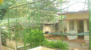 Parasparam_Cat_Shelter